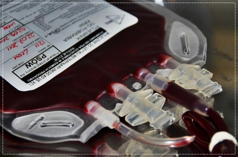 Weterynaryjny Bank Krwi im. Milusia [źródło: http://www.krewdlapsa.pl]
